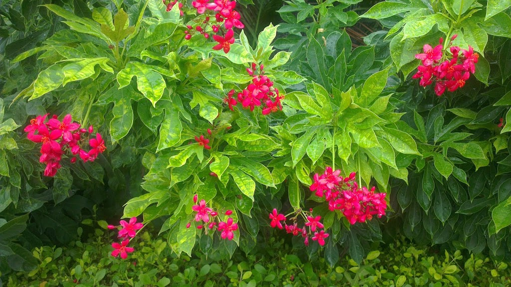The Red Flowers After Rain